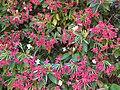 Gardenology.org-IMG 0318 rbgs10dec.jpg
