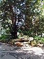 Geneve jardin Anglais 2011-09-13 13 42 48 PICT4742.JPG