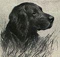 German Longhaired Pointer Portrait.jpg