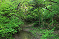 Gfp-illinois-starved-rock-state-park-into-wildcat-canyon.jpg