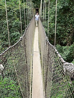 Rainforest canopy walk at Kakum National Park