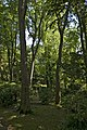 Giardini Papadopoli (arbres).jpg