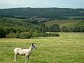 Girvan Valley - geograph.org.uk - 232537.jpg