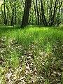 Glasweiner Wald (Schwarzwald) nächst dem Grünen Kreuz sl2.jpg