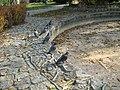 Gołębie szukają wody w pustej fontannie - panoramio.jpg