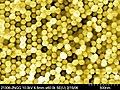 Gold Nanowire Array.jpg