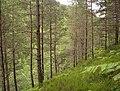 Gorge of the Allt na Bogair - geograph.org.uk - 501860.jpg