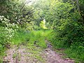 Grassey Lane, Llanteg - geograph.org.uk - 1365204.jpg