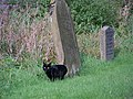 Gravestone and cat, St Mary and St Laurence, Rosedale Abbey - geograph.org.uk - 682494.jpg