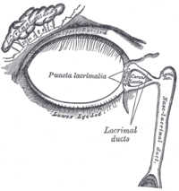 The lacrimal apparatus. Right side.