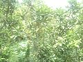 Greeneries.jpg
