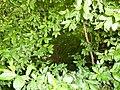 Greenwood forest farming 12.JPG