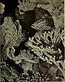 Guide leaflet (1901) (14768270022).jpg