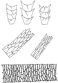 Haarstrukturen im Vergleich.png