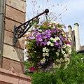 Hanging basket, Strasbourg, 2014 (05).JPG