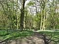 Hardwick Wood Entrance - Footpath Straight Ahead - geograph.org.uk - 785857.jpg