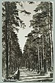 Harjutie, Harjutien korkea osa, Th. Sunell 1920s–1930s PK0126.jpg