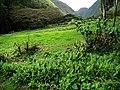 Hawaii Big Island Kona Hilo 230 (7025143539).jpg