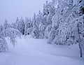 Heavy snow - 2 (3260168691).jpg