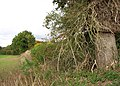 Hedgerow field boundary - geograph.org.uk - 1532693.jpg