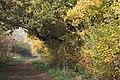 Hedgerow near Awsworth - geograph.org.uk - 607898.jpg