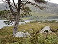 Hillside down to Loch Affric - geograph.org.uk - 57770.jpg