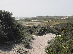 plantations sur du sable