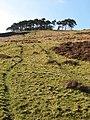 Hog Knowe Wood - geograph.org.uk - 376257.jpg
