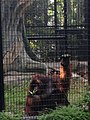 Hong Kong Zoological and Botanical Gardens 14.jpg