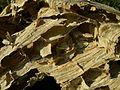 Hornet's nest2.jpg