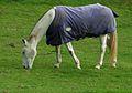 Horse (10493284753).jpg