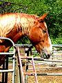 Horse (4159915038).jpg
