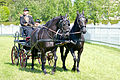 Horse driving at Stiegl 2011 14.jpg
