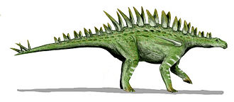 Stegosauria - Huayangosaurus is the oldest and most basal stegosaurian of which good material is known, giving an impression of the build of the earliest members of the group