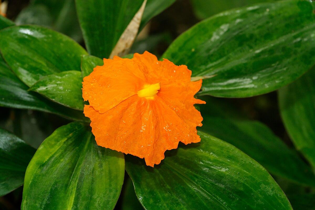 Orange8 cm diameter - 4 2