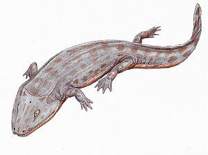 Iberospondylus - Iberospondylus schultzei