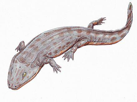 Iberospondylus