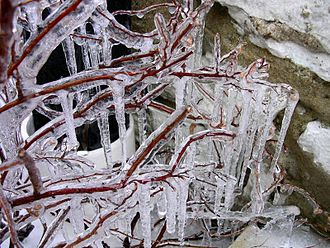 Icicle - Icicles on a tree