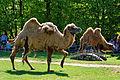Im Wildpark Bad Mergentheim genießen auch die Nutztiere großes Interesse beim begeisterten Publikum. 05.jpg