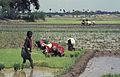 India-1970 098 hg.jpg