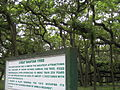 India - Kolkata - 07 - Great Banyan Tree (4431979703).jpg