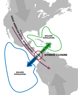 Isthmus of Panama (closure) - Speciation of marine organisms (w annot)