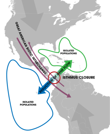 Isthmus of Panama (closure) - Speciation of marine organisms (w annot).png