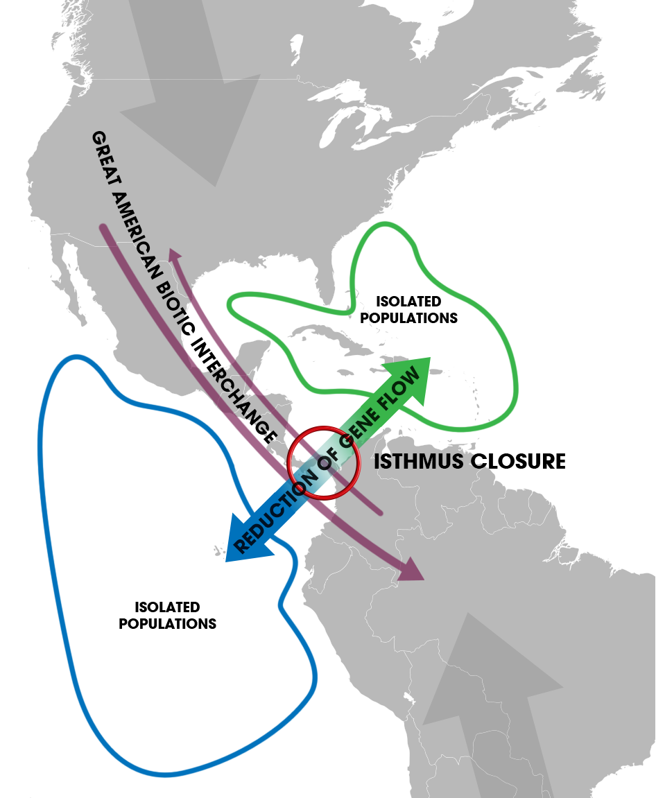 Isthmus of Panama (closure) - Speciation of marine organisms (w annot)