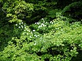 Itadori, Seki, Gifu Prefecture 501-2901, Japan - panoramio (5).jpg
