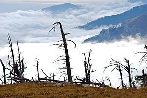 Jalta mount reserve Koboplu.jpg