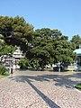 Jardin Albert 1er, Nice, Provence-Alpes-Côte d'Azur, France - panoramio - M.Strīķis (2).jpg