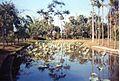 Jardin de Pamplemousses (3005313462).jpg