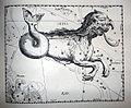 "Johannes Hevelius - Prodromus Astronomia - Volume III ""Firmamentum Sobiescianum, sive uranographia"" - Tavola OO - Cetus.jpg"
