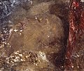 Joseph Mallord William Turner (1775-1851) - Head of a Person Asleep - N05494 - National Gallery.jpg